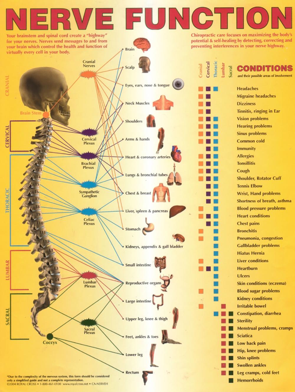 Similiar Spinal Nerve Root Chart Keywords