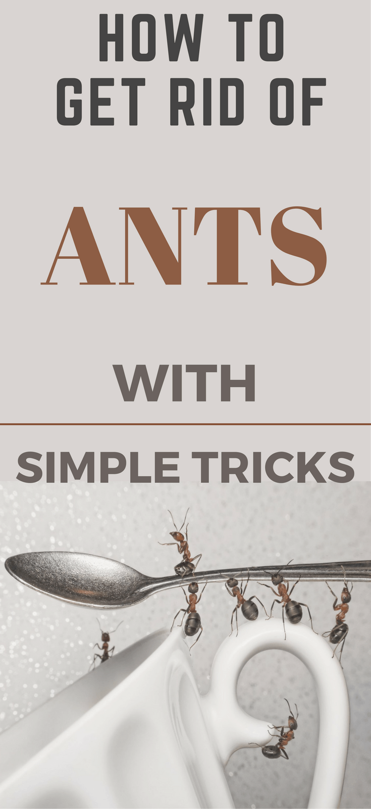 How to Get Rid of Ants In The Kitchen With Simple Tricks