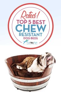 Top 5 Best Chew Resistant Dog Beds: 2016 Review | Top Dog Tips