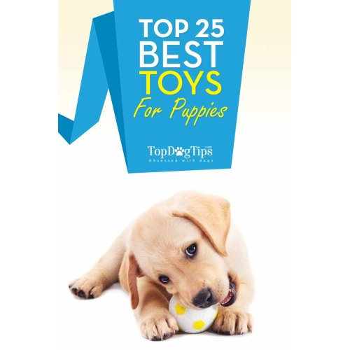 Medium Crop Of Dog Toys For Aggressive Chewers