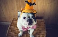 Let's Talk: DIY Dog Halloween Costumes  Top Dog Tips