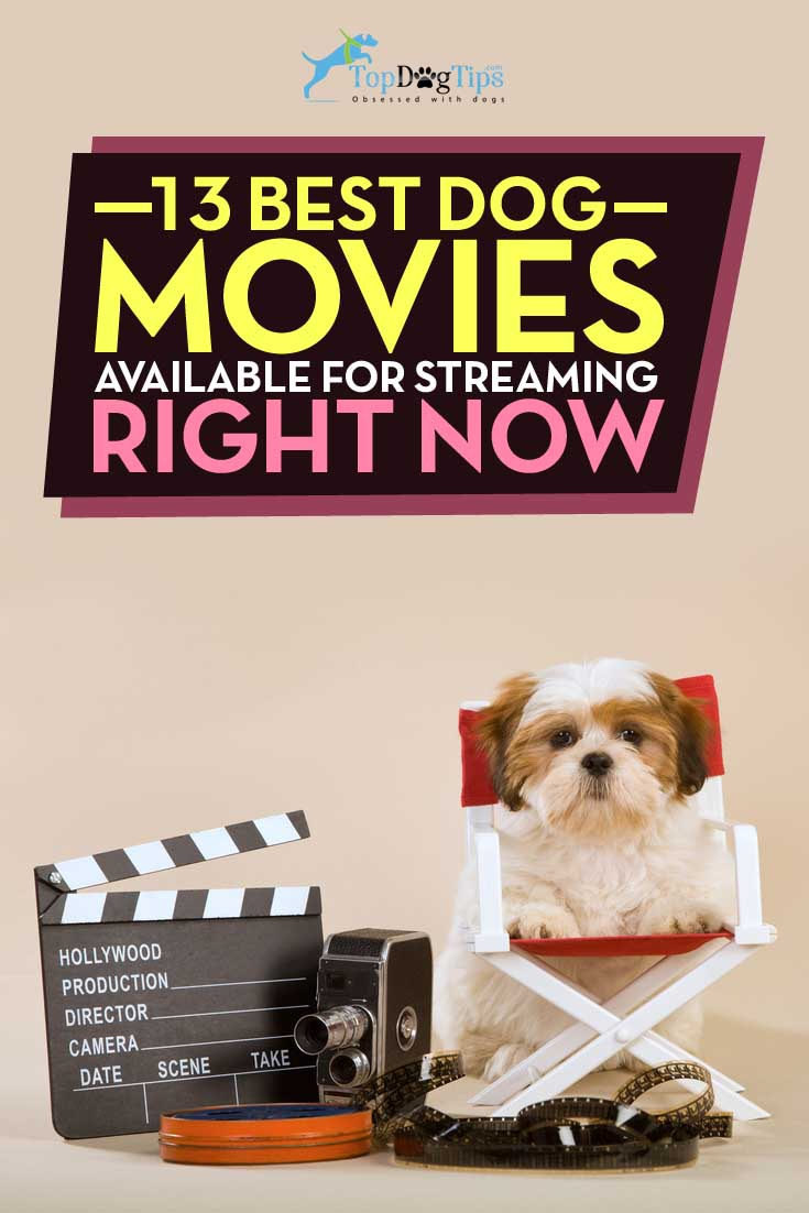 Snuggling On Sofa 13 Best Dog Movies Available For Streaming Right Now – Top