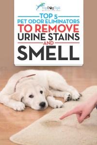 Dog Urine Smell