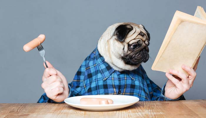 Best Dog Food For Pugs 2018 How To Feed What To Feed Pugs