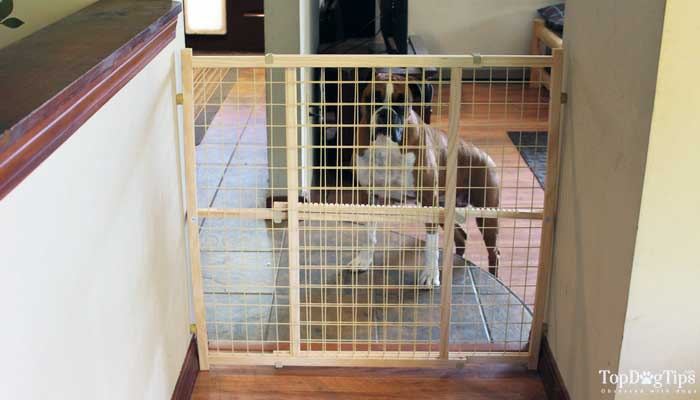 Best Dog Gates For Stairs Indoors We39ve Compared Top