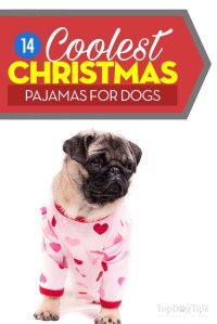 Top 14 Best Christmas Dog Pajamas That Look Extra Cute on Dogs