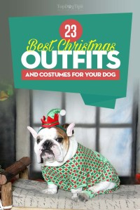 Top 23 Best Dog Christmas Outfits and Costumes to Dress Up ...