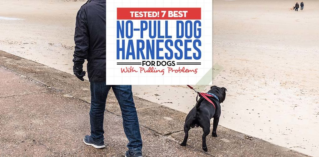 Top 7 Best No Pull Dog Harness for Dogs That Pull (2018 Review)