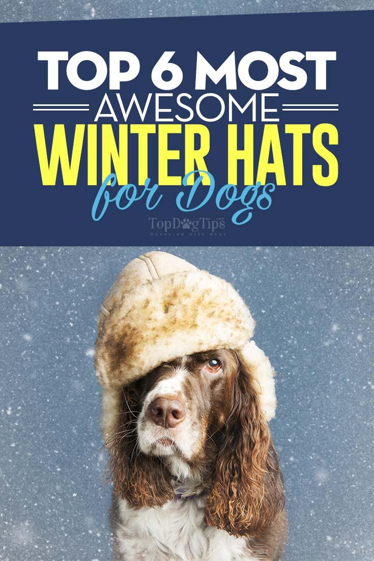 Fullsize Of Dogs Wearing Hats