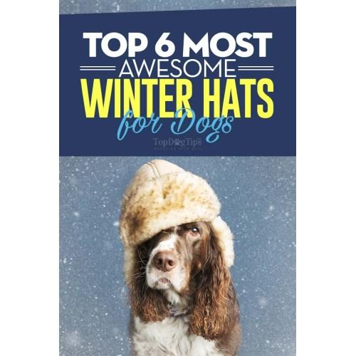Medium Crop Of Dogs Wearing Hats