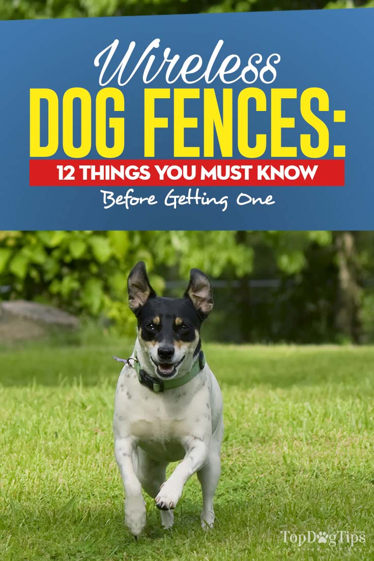 Wireless Dog Fence 12 Pros And Cons You Must Know Infographic