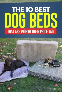 Top 10 Best Dog Bed for Small and Large Breeds (2018 Review)