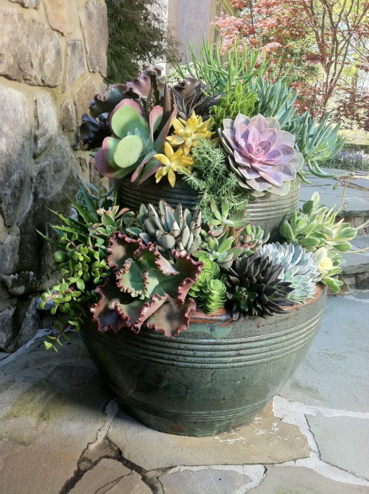 Succulent Pots Stacked Succulent Pots You Need To See Today