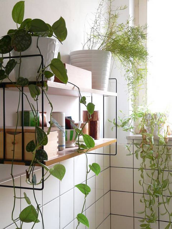 Design Of Kitchen Cabinet Doors Indoor Climber Plants Are The Right Choice If You Want To