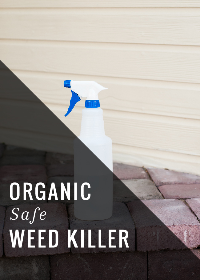 Top 10 Organic Homemade Weed Killers Top Inspired