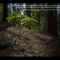 Planting Tree Hadith Wallpaper