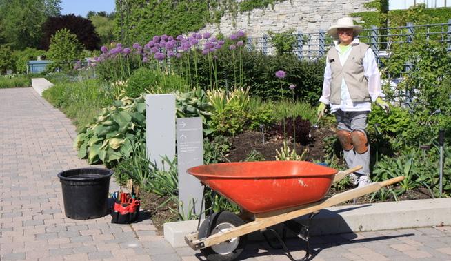 garden-volunteer