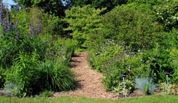 natures garden path-small