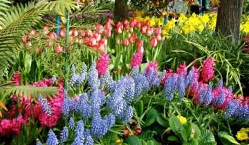 Spring at Allan Gardens