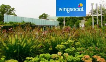tbg-livingsocial