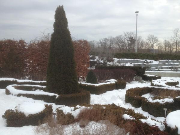 Knot Garden Under Snow January 9,2013