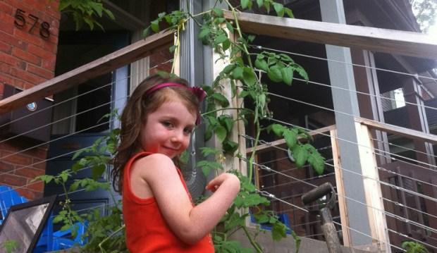 Hilary - tying up the big vines