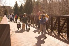 The walkers head through Cedarbrae park.