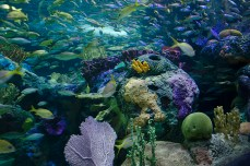 The aquarium offers many interactive information for visitors to know more about the species.