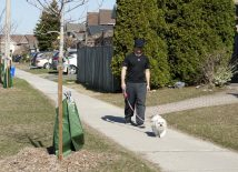 Walking a dog in a more suburban or rural area can improve an individual's health and mood, rather than in an urban area.