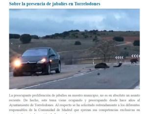 jabalies-nota-ayto-torrelodones