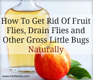 Natural Insect Repellent For Fruit Flies, Drain Flies And Other Insects