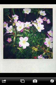app_photo_shakeitphoto_5.jpg