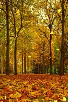 app_ent_autumn_leaves_1.jpg