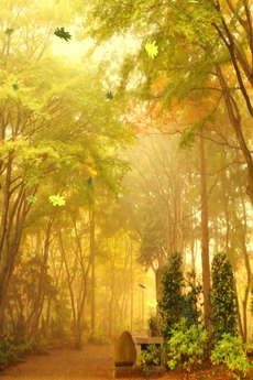 app_ent_autumn_leaves_3.jpg