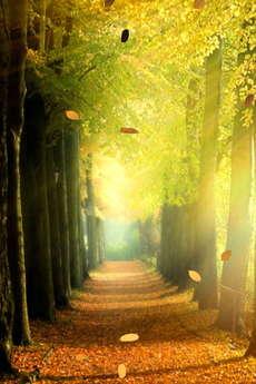 app_ent_autumn_leaves_6.jpg