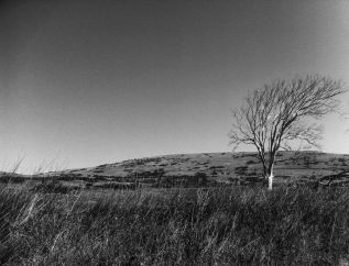 Harmony Headlands