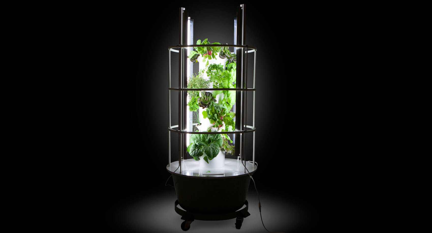 Grow Lights For Indoor Plants Growing Tomatoes Indoors Is It Worth It