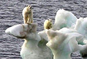 Polarbears_1