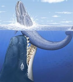 Monster_whale