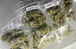 Medical_marijuana_1020