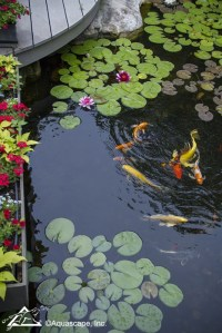 Backyard Landscape Design Plan with Pond - Town & Country ...