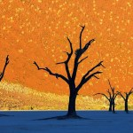 Dead Vlei, incredible cemetery ghost trees in Namibia
