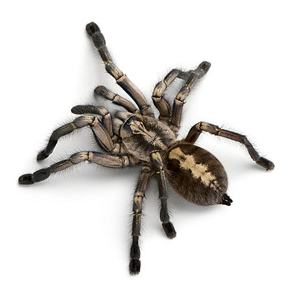 Michigan has 2 Poisonous Spiders, And One Really Scary 1