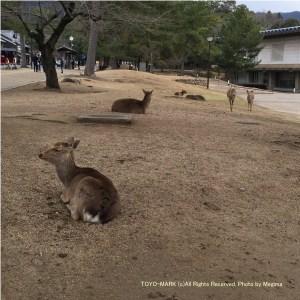 奈良公園@東洋マーク