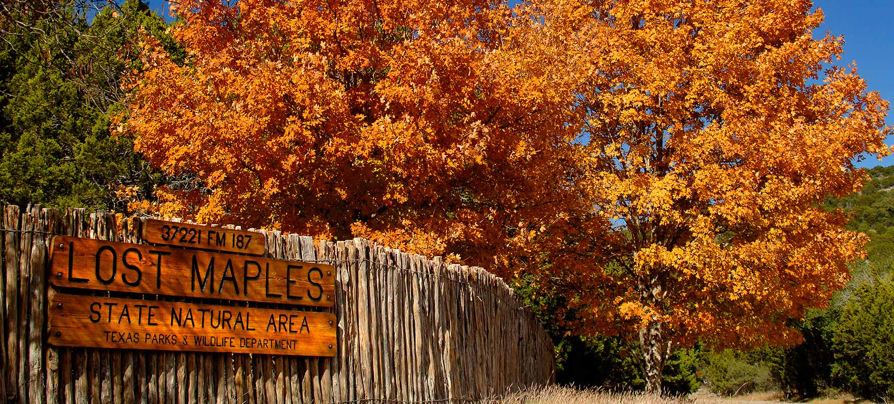 Free Fall Harvest Wallpaper Lost Maples State Natural Area Texas Parks Amp Wildlife