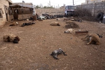 Animal carcasses lie on the ground, killed by what residents said was a chemical weapon attack on Tuesday, in Khan al-Assal area near Aleppo