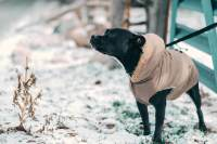 Dog jackets for winter: Here are our favorites! | Tractive