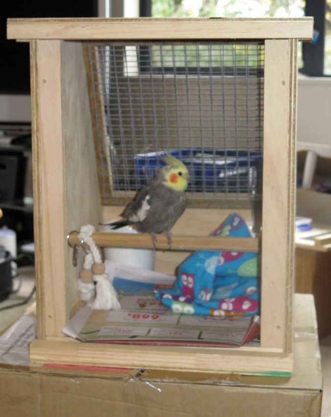 Rocky in his flight cage