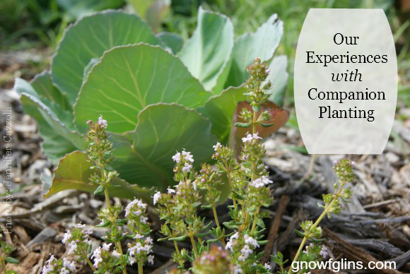 Our Experiences With Simple Companion Planting - A Great Old Technique