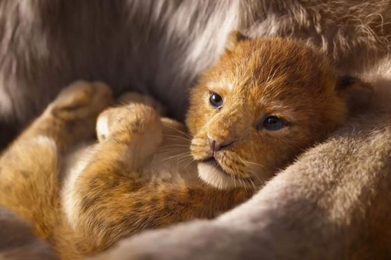 the lion king movie trailer 2017